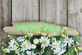 Green weathered welcome sign with border of flowers and daisies by wooden fence