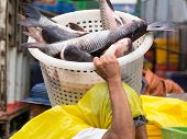 Worker Carrying Fish At Market