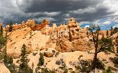 pic of hoodoo  - Hoodoos tower over the Mossy Cave Trail in Bryce Canyon National Park Utah - JPG