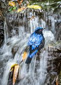 Bird Taking A Bath In The Waterfall