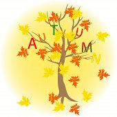 Tree Maple With Letters Autumn