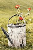 Garden Pot With Roses