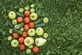 Harvest. Fruits and vegetables lying in the grass. Cucumbers, tomatoes, peppers, apples - top view.