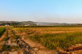 Various Agricultural Crop Field