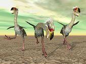 Terror Bird Phorusrhacos