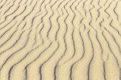 foto of dauphin  - waves at the sandy beach in harmonic pattern - JPG
