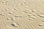 stock photo of dauphin  - harmonic pattern of waves at the sandy beach with pattern of footsteps - JPG