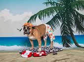image of boogie board  - An English Bulldog on an ocean beach scene surfing on a boogie board with his lifeguard gear near by - JPG