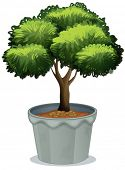 Ilustration of a potted plant