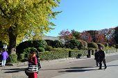 Tokyo, Japan - November 22, 2013: Visitors Enjoy Colorful Trees In Ueno Park, Tokyo.