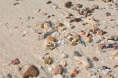 Sea shell and stone pieces texture