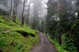 picture of twisty  - Twisty road through the forest to Hatu Peak in India  - JPG
