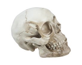 picture of eye-sockets  - Skull with eye sockets and teeth and cranial lines  - JPG