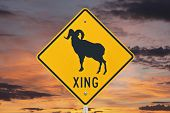Big Horn Sheep crossing caution sign with orange sunrise.