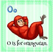 Illustration of an alphabet O is for orangutan