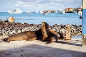 sea lion in the Galpagos Islands