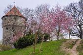 View Of Tallinn Spring Day