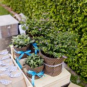 Cuties Small Tree In Flowerpots And Ribbon Are Gift For Special Day