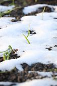 Grass on the ground in the snow