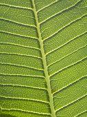 Nature Veins
