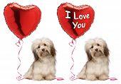 I Love You Valentine Havanese Dog Set