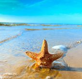 foto of shell-fishes  - Star Fish Shell  - JPG