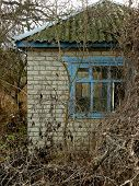 small abandoned house surrounded by leafless trees and dry lianas