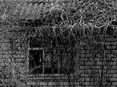 fragment of small abandoned house overgrown with lianas in black and white