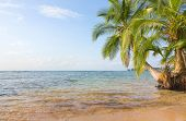 foto of deserted island  - Deserted Boca del Drago beach on the archipelago Bocas del Toro - JPG