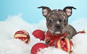 stock photo of christmas puppy  - Cute little puppy laying in the snow with Christmas ornaments around her - JPG