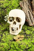 Skull with flowers and coins on green grass background