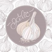 Garlic drawing. Realistic garlic bulb and lettering in round frame. Background with different garlic bulbs.