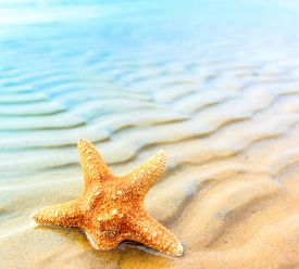 image of shell-fishes  - Star Sea Shell  - JPG