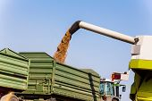 stock photo of combine  - a cornfield with wheat at harvest time - JPG