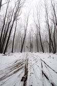 stock photo of icy road  - Winter road through the trees in the snow - JPG