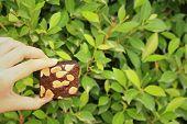 foto of brownie  - Brownie in hand on a background of green leaves - JPG