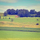 picture of bavaria  - Plantation of Fodder Corn in Southern Bavaria Retro Effect - JPG