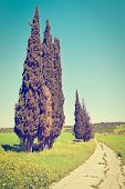 stock photo of dirt road  - Cypress Trees along the Dirt Road in Israel Retro Effect - JPG
