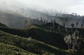 stock photo of fumes  - Tropical forest in the fumes of toxic volcanic gas at the slopes of Kawah Ijen volcano - JPG