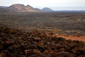 stock photo of volcanic  - bush timanfaya in los volcanes volcanic rock stone sky hill and summer lanzarote spain plant flower  - JPG
