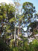 stock photo of penetration  - rainforest sunlight penetrated - JPG