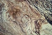 stock photo of white bark  - Macro of a bark of olive trees in black and white creates an abstract effect of texture - JPG