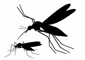 Flying Mosquito Silhouette