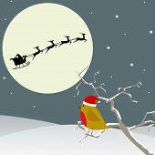 Bird Watches Santa Flying By