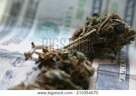 Marijuana Buds On