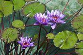 garden flowres