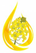 Canola Oil. Stylized Drop Of Oil And Rapeseed Flower.