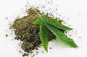 dry marijuana and green leaf