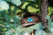 Brilliant Blue Robin Eggs