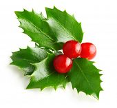 Holly berry leaves Christmas decoration isolated on white background poster
